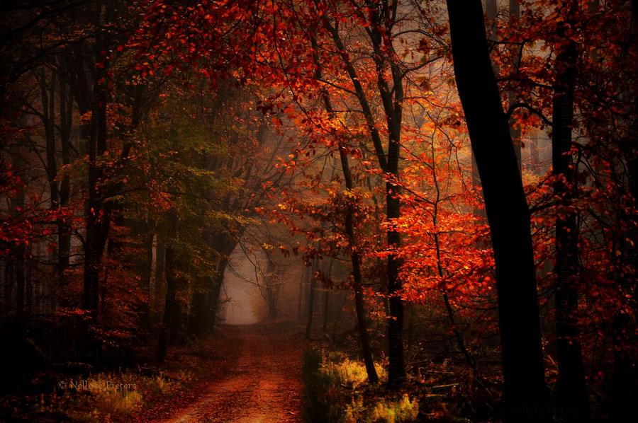 Khám phá những khu rừng đẹp như cổ tích ở Hà Lan