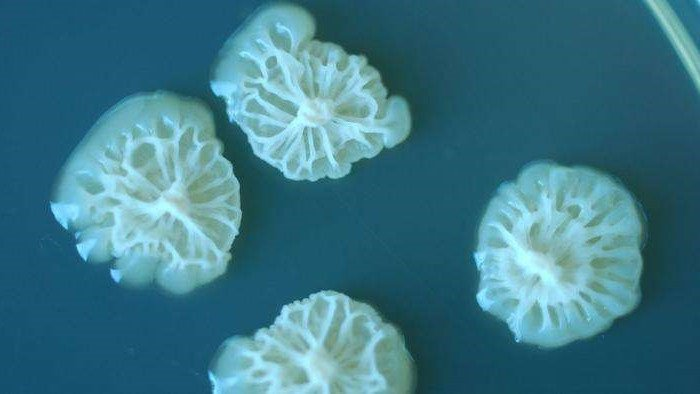 Khám phá sốc về sự phát triển của vi khuẩn trên không gian