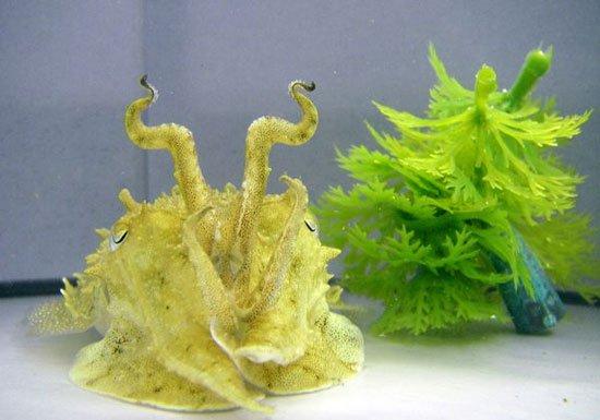 Khám phá tài năng biến hình của cá mực