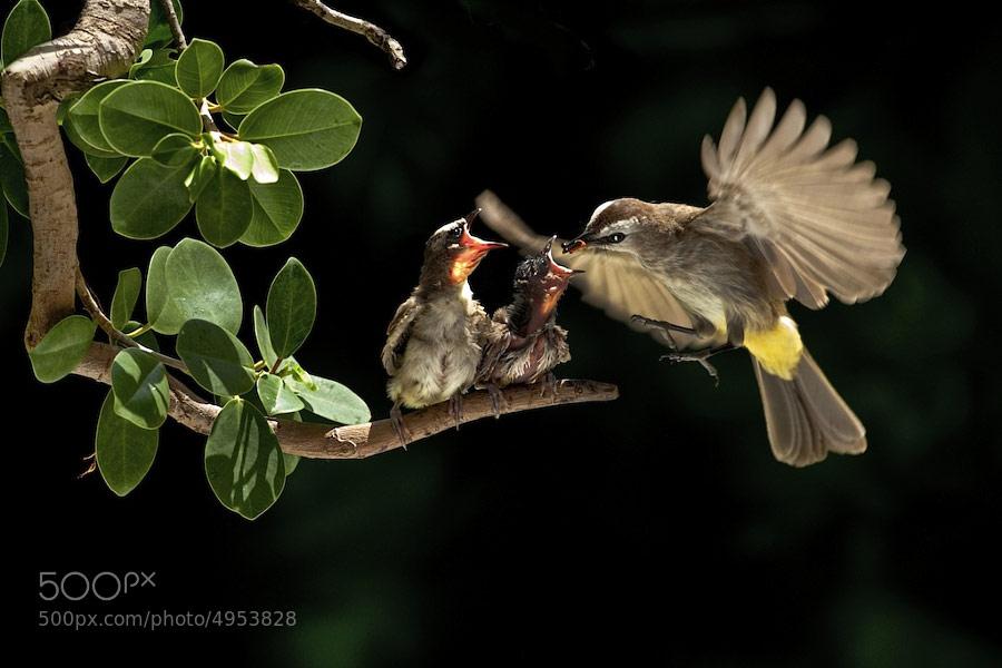 Khoảnh khắc bố mẹ chim chăm con siêu cảm động