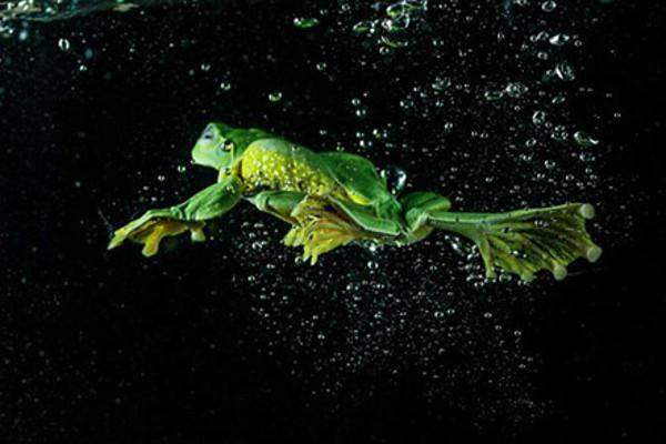 Khoảnh khắc con ếch lặn dước nước như vận động viên chuyên nghiệp