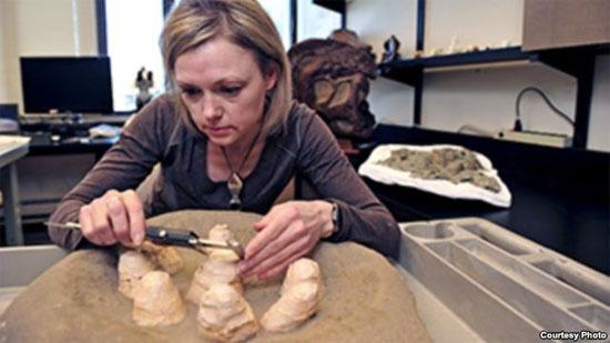 Khủng long ăn thịt có hành vi làm tổ giống loài chim