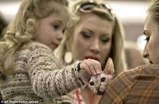 Kỳ dị mèo giống hệt nhân sư Ai Cập huyền thoại