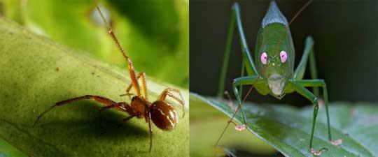 Kỳ thú những sinh vật như bước ra từ phim giả tưởng