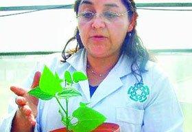 Kỹ thuật tăng 50% khả năng sinh trưởng của cây