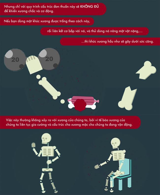 Làm thế nào để thay thế xương gãy bằng phương pháp nuôi cấy xương?