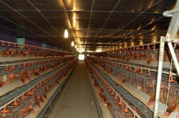 Lắp máy phát điện chạy bằng bio-gas tại 42 trang trại