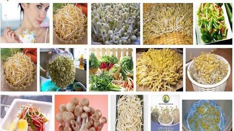 Lây nhiễm E.coli: Thủ phạm là giá đỗ?