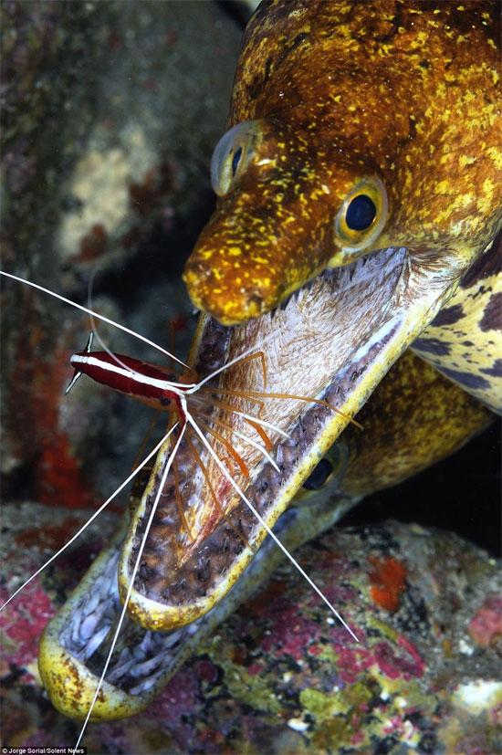 Loài cá có hai bộ răng