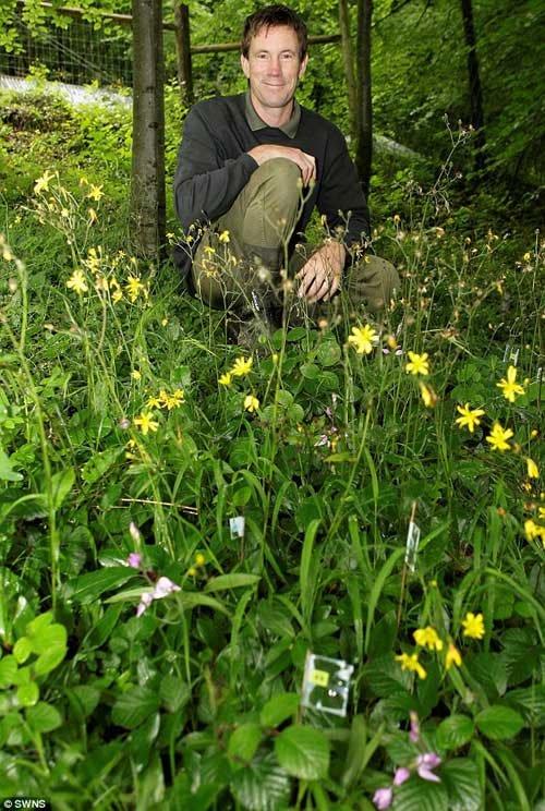 Loài hoa lan 70 năm mới nở 1 lần