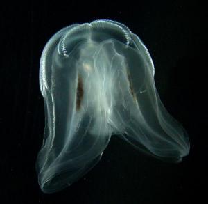 Loài vật đầu tiên trên Trái đất