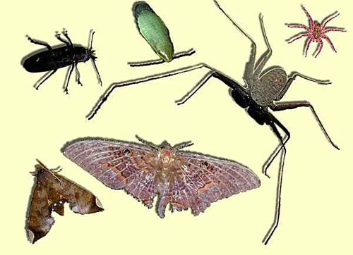Lợi ích của loài bọ ăn xác chết