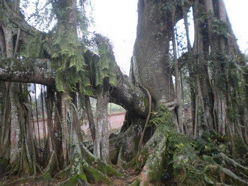 Lý giải hiện tượng thần giao cách cảm giữa cây và người