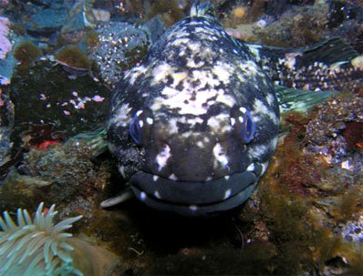 Máu của loài cá ở Nam Cực có chất chống đông