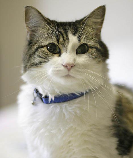 Mèo giúp cảnh báo cơn động kinh của chủ