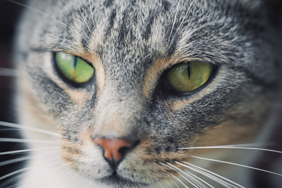 Mèo thừa hưởng thói quen của chủ