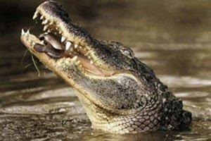 Mozambique tuyên chiến với cá sấu ăn thịt người