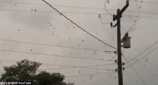Mưa nhện ở Brazil