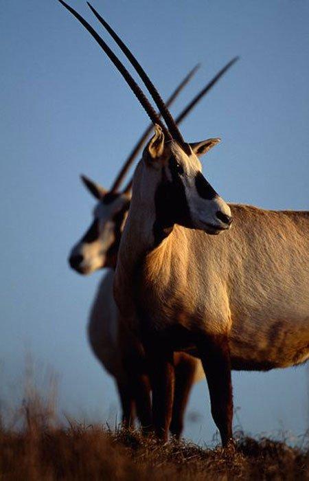 Năm loài động vật có nguy cơ tuyệt chủng