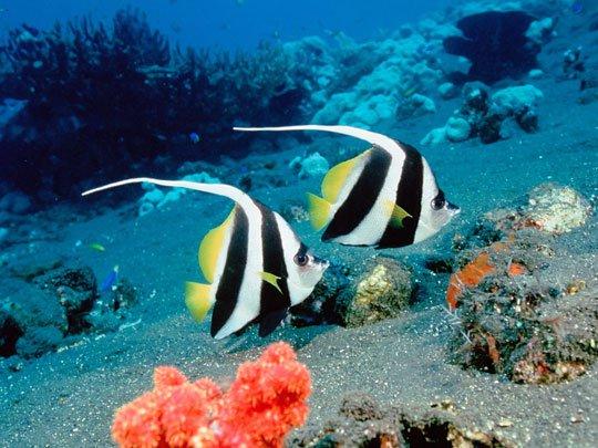 Nạn axít hóa đe dọa nghiêm trọng môi trường biển