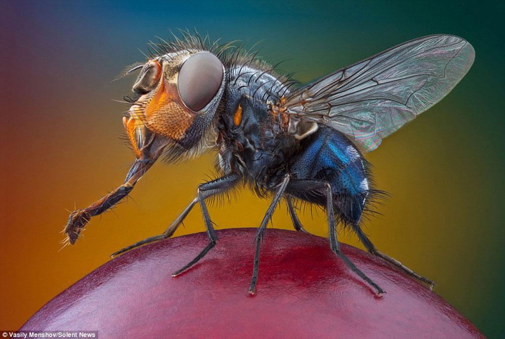 """Ngắm các loài côn trùng đội lốt quái thú"""""""
