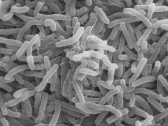 Ngăn chặn hiệu quả sự lây lan của bệnh dịch tả