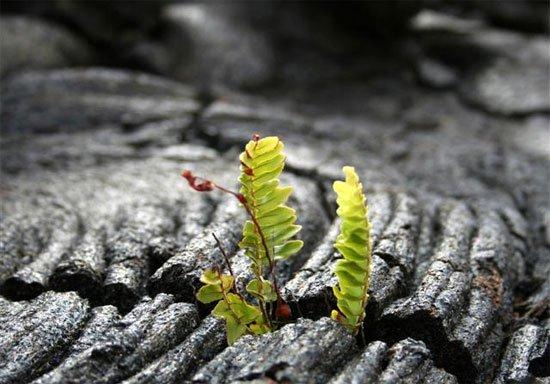 Nghiên cứu gây sốc về nguồn gốc sự sống trên Trái đất