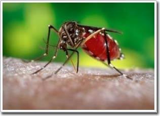 Nghiên cứu phương pháp diệt muỗi mới