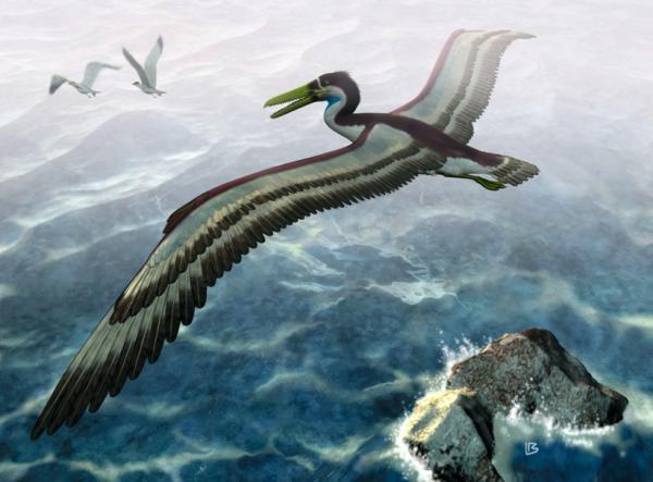 Ngỗng cổ đại có răng cứng như xương