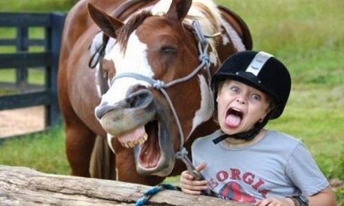 Ngựa biết đọc cảm xúc của con người
