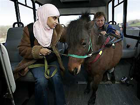 Ngựa thay chó dẫn đường