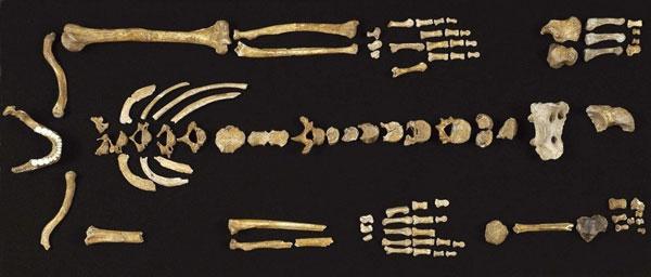 Người Neanderthal thuận tay nào?