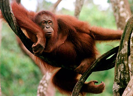 Nguy cơ dịch bệnh từ buôn bán động vật hoang dã