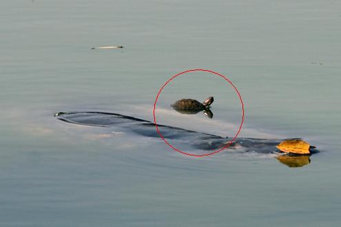 Nhà khoa học nói gì tại Hội thảo bảo vệ Cụ Rùa?