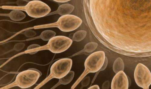 Nhật Bản: Tạo ra tinh trùng từ tế bào gốc đa năng