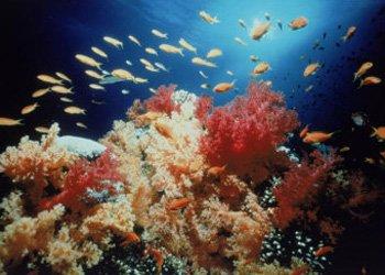 Nhiều loài cá có thể tuyệt chủng vì mất cân bằng giới