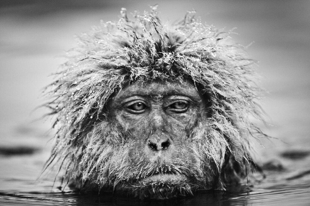 Những bức ảnh đen trắng tuyệt đẹp về thế giới động vật hoang dã