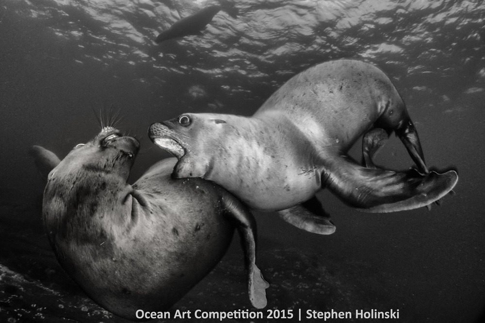Những bức ảnh tuyệt vời về cuộc sống dưới lòng đại dương