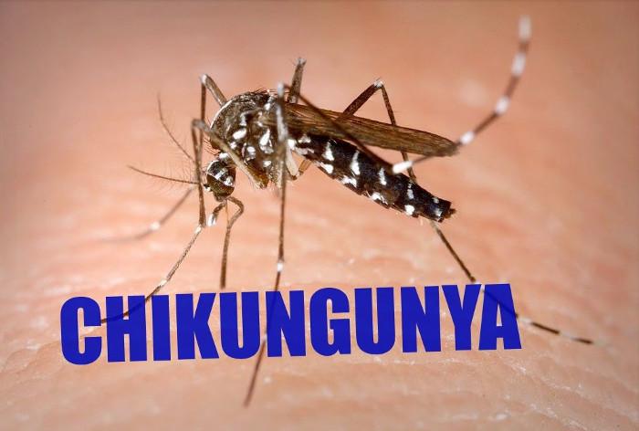 Những căn bệnh khủng khiếp do muỗi lây truyền