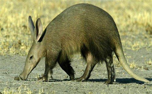 Những chiếc mũi kỳ lạ trong thế giới động vật