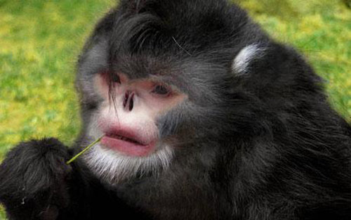 Những động vật kỳ lạ nhất năm 2010