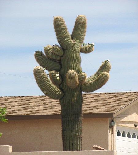 Những gã khổng lồ trên sa mạc