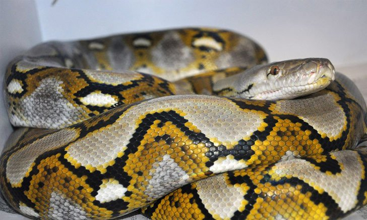 Những hiện tượng bí ẩn thú vị trong thế giới động vật