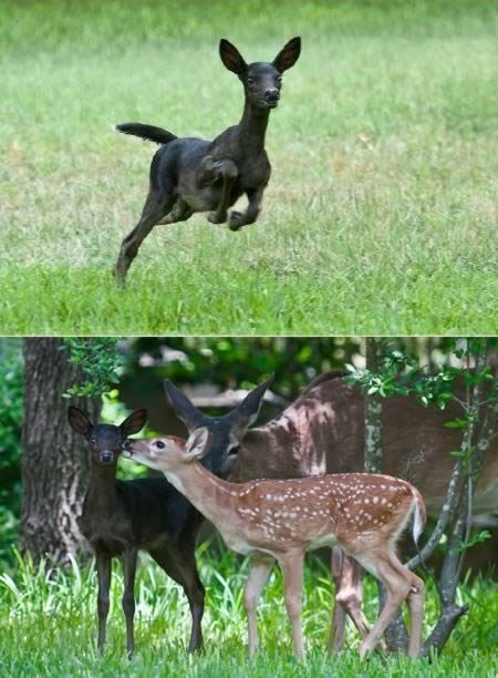 Những kẻ lạc loài trong tự nhiên