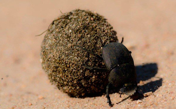 Những khả năng đáng kinh ngạc của côn trùng