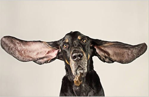 Những kỷ lục Guinness kỳ quặc của động vật