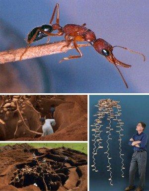 Những kỳ quan trong thế giới động vật