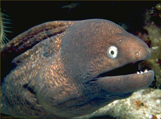 Những loài cá quái dị và nguy hiểm bậc nhất