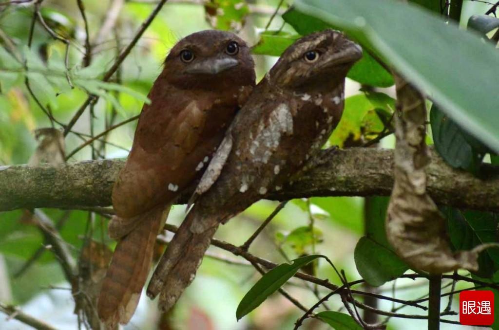 Những loài chim có vẻ ngoài lạ lùng nhất thế giới