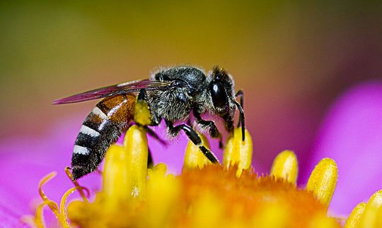 Những loài côn trùng được 'sủng ái' nhất hành tinh